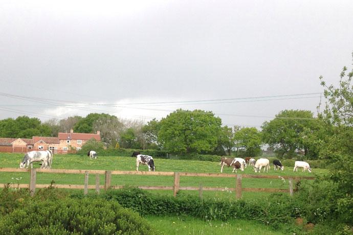 ivy-farm-9