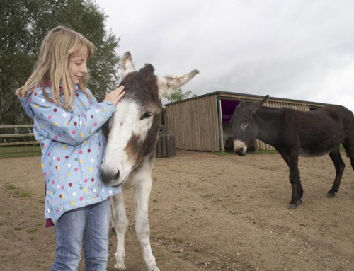 Manor Farm Animal Centre & Donkey Sanctuary